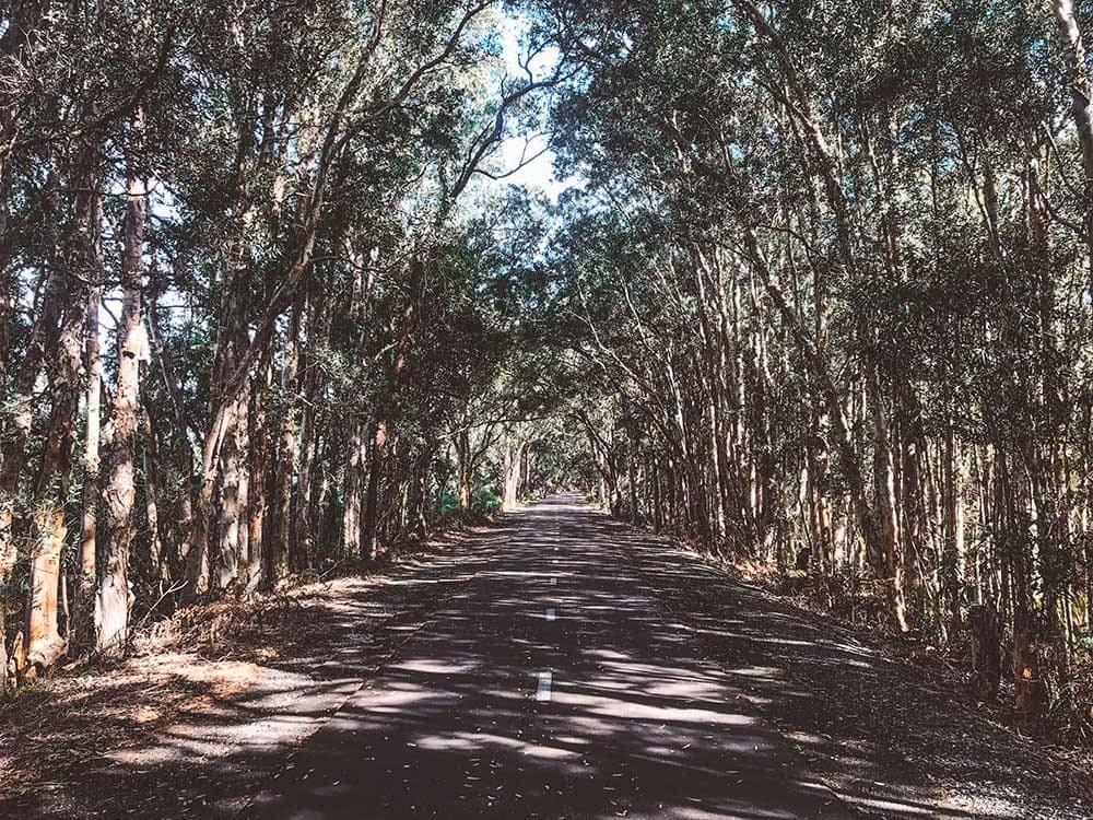 the-fernleigh-track-newcastle-nsw