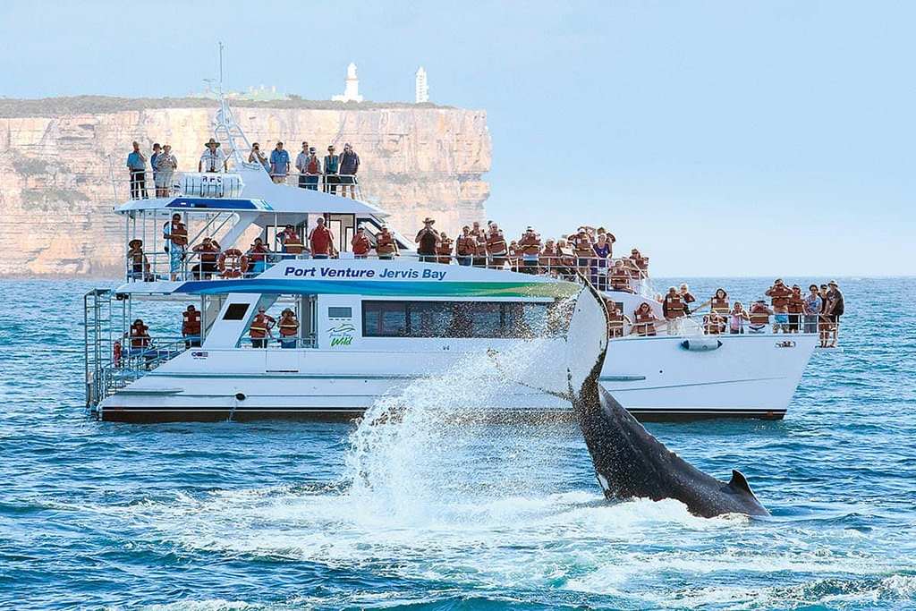 This image has an empty alt attribute; its file name is jervis-bay-dolphin-cruise-1024x683.jpg