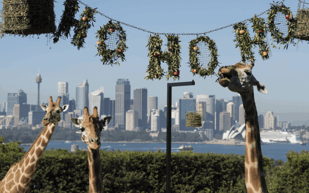 taronga-zoo-christmas-day-things-to-do-in-sydney