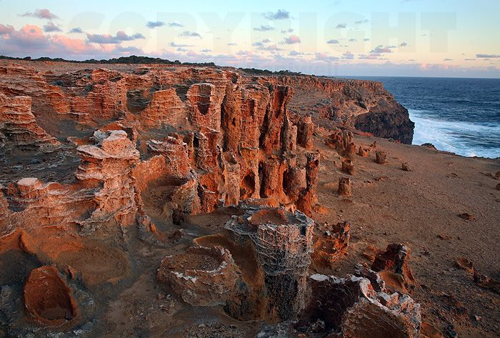 petrified-forest-mount-gambier
