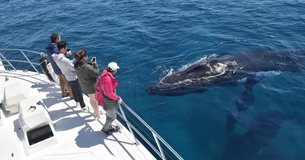 whale-watching-augusta